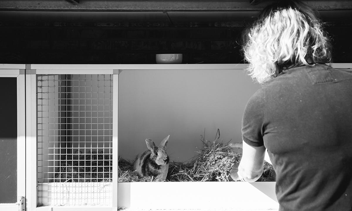 Een vrijwilliger verzorgt een konijn bij Dierentehuis Stevenshage. Foto: Sanne van den Berg van Dog Portrait Hondenfotografie