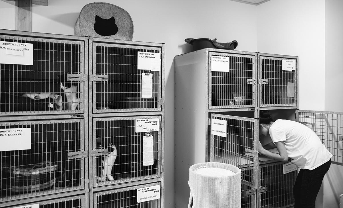 Een vrijwilliger verzorgt de katten bij Dierentehuis Stevenshage. Foto: Sanne van den Berg van Dog Portrait Hondenfotografie