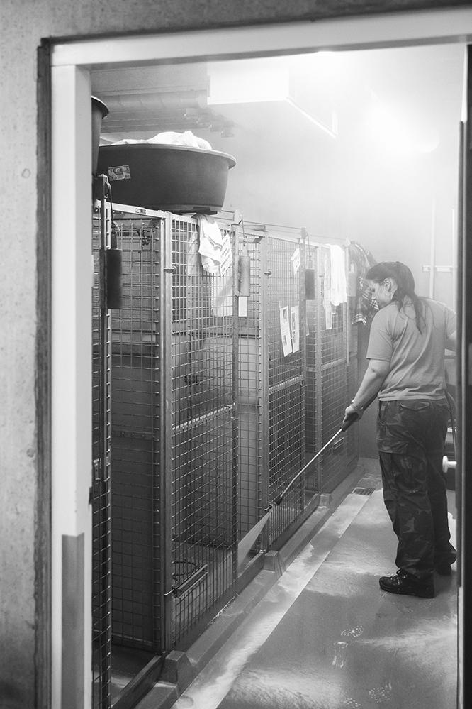De hondenkennels worden dagelijks met een hogedrukreiniger schoongemaakt bij Dierentehuis Stevenshage in Leiden. Foto: Sanne van den Berg (Dog Portrait)