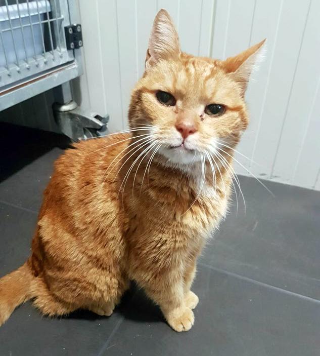 Kater Krasny heeft inmiddels een nieuw huisje gevonden. Klik op de foto voor een overzicht van beschikbare katten bij Dierentehuis Stevenshage in Leiden.