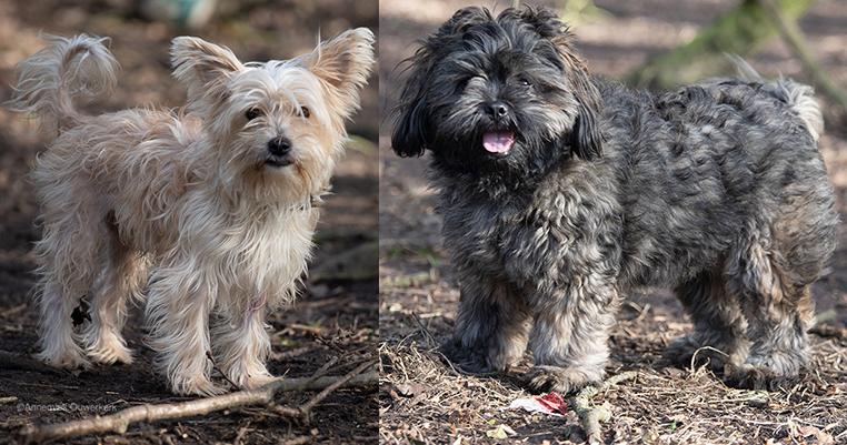 Intussen in het asiel: Hondjes op dinsdag