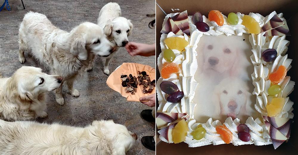 Asielmedewerker Teun viert zijn achtste verjaardag met gedroogde hondensnacks voor zijn hondenvrienden en taart voor zijn mensenvrienden.