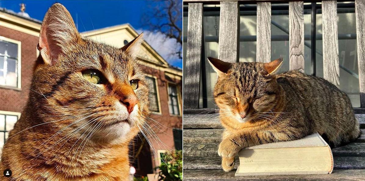 Lily Rustycat is vaste gast van de Hortus botanicus in Leiden.