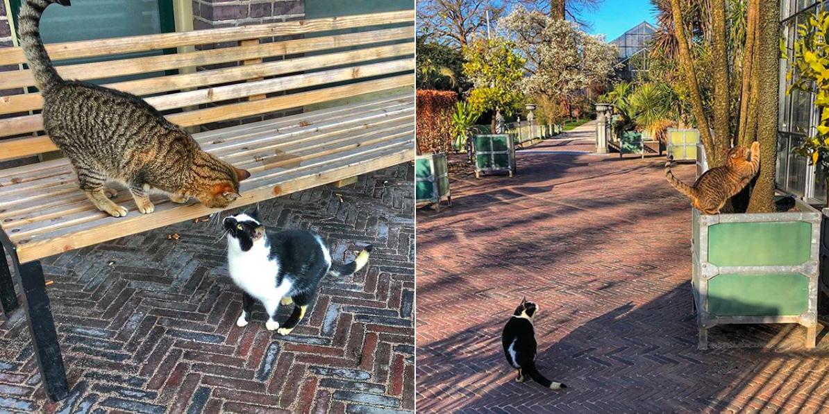 Lotus Defaultcat (zwart-wit) en Lily Rustycat zijn vaste gasten in de Hortus botanicus Leiden.