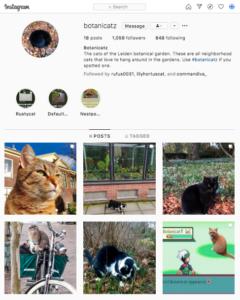 De katten van de Hortus botanicus Leiden hebben een eigen Instagram account.