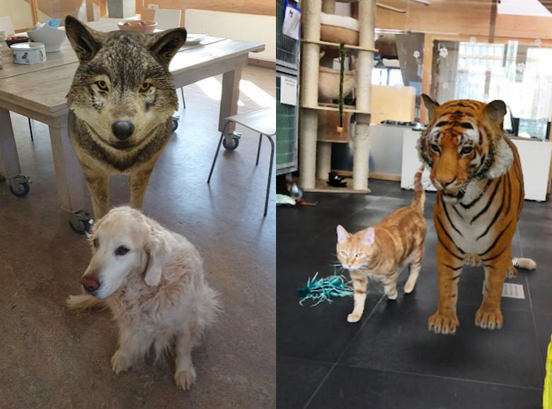 Met een nieuwe functie van Google kun je wilde dieren op je telefoonscherm toveren (Android, klik voor instructies).