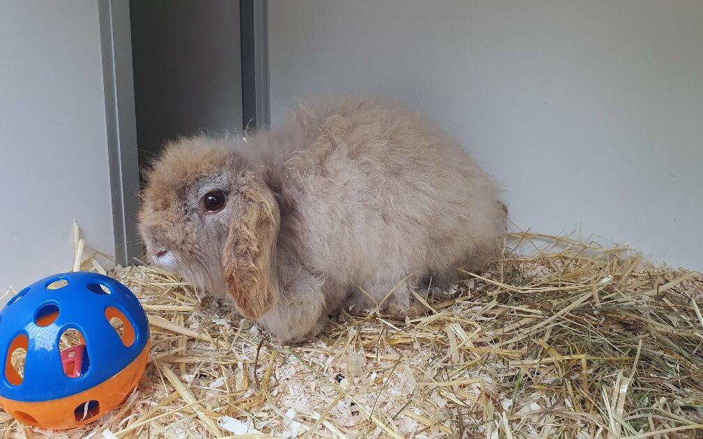 Heeft u interesse in adoptie van een Teddy Widder konijn? Lees dan onze pagina over adoptie van konijnen en stuur een mailtje.
