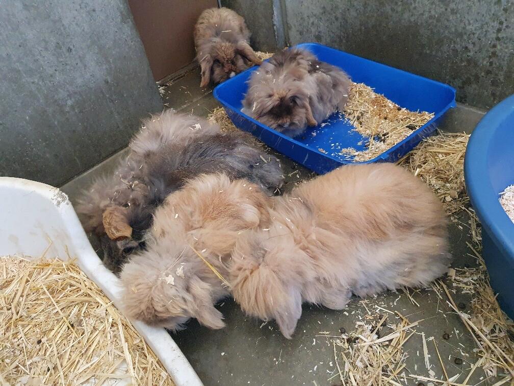 Een groep Teddy Widder konijnen verblijft bij Dierentehuis Stevenshage in Leiden in door de coronacrisis leegstaande rij hondenkennels.