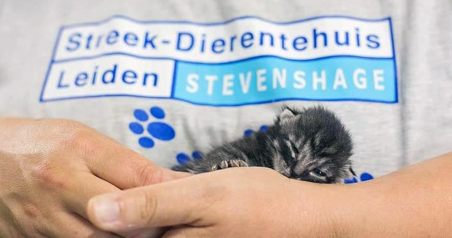 Kitten zonder moederpoes bij Dierentehuis Stevenshage in Leiden.