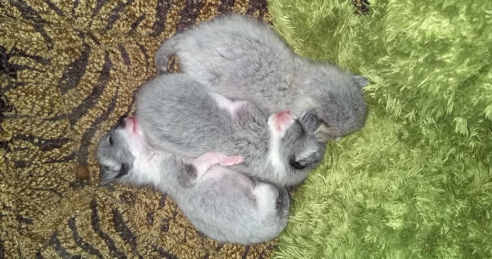 Kittens zonder moederpoes bij Dierentehuis Stevenshage in Leiden.