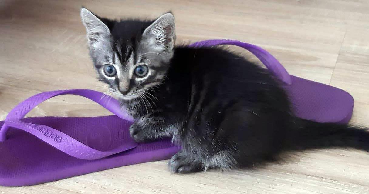 Kitten Wambli bij haar pleeggezin