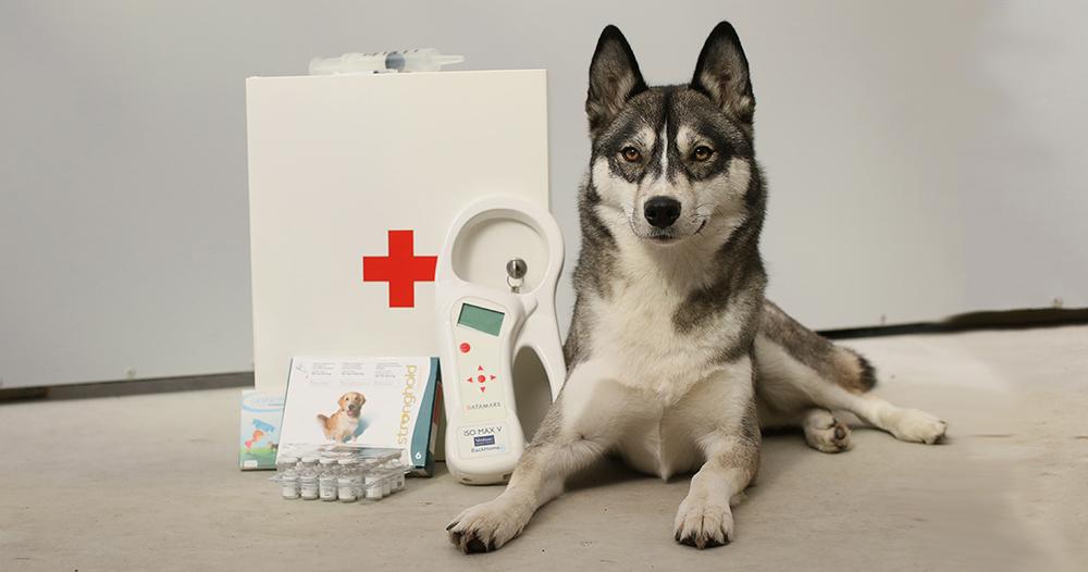 Asielmedewerker Jessie bewaakt de voorraad entingen en andere medische zaken bij Dierentehuis Stevenshage.