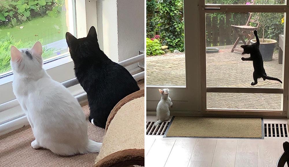 Kittens Irma en Corline worden verzorgd bij een pleeggezin van Dierentehuis Stevenshage.