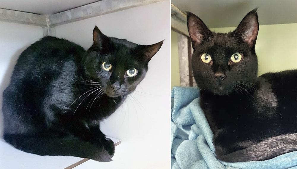 Intussen in het asiel: De zwarte kat