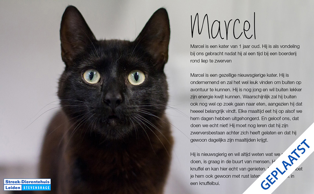 Zwarte katten zouden het niet goed doen op foto's. Zwarte kater Marcel bewijst het tegendeel. (Foto: Maud Velders)