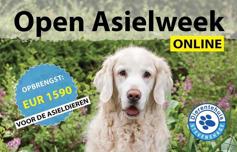 Kijk hier alle video's van de Open Asielweek Online terug!