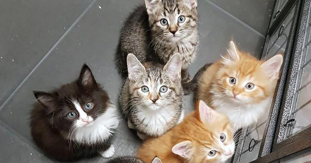 Wil je een kat aanschaffen? Kijk altijd eerst bij een dierenopvang in de buurt.