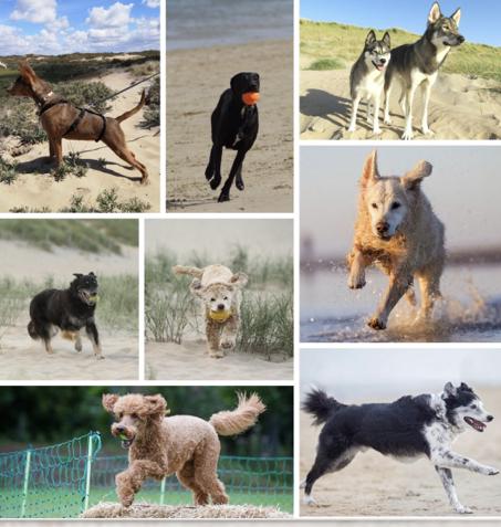 De honden van de medewerkers van Dierentehuis Stevenshage in Leiden.