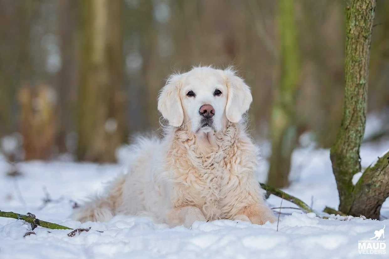 Asielmedewerker Teun in de sneeuw, gefotografeerd door Maud Velders.