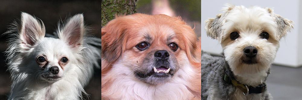 Intussen in het asiel: Het verhaal van hondje Harley