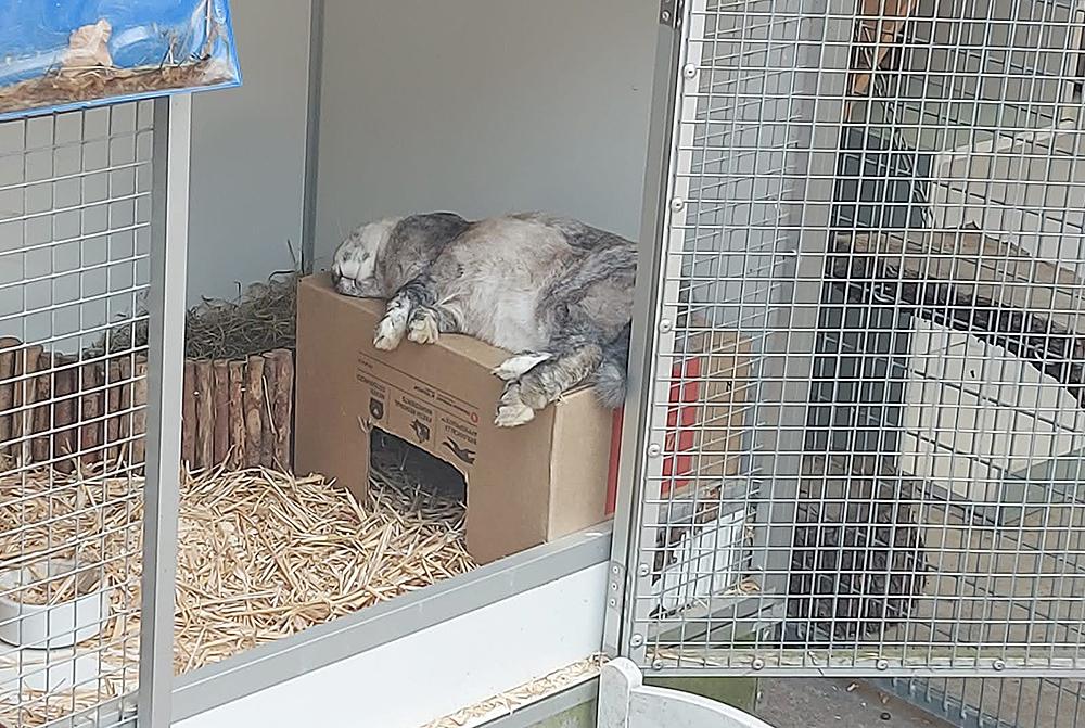 Een ontspannen konijn bij Dierentehuis Stevenshage in Leiden.