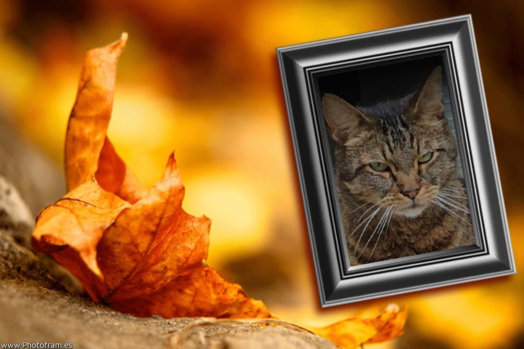 Aslan was de kat van Nicolette, asielbeheerder van Dierentehuis Stevenshage in Leiden.