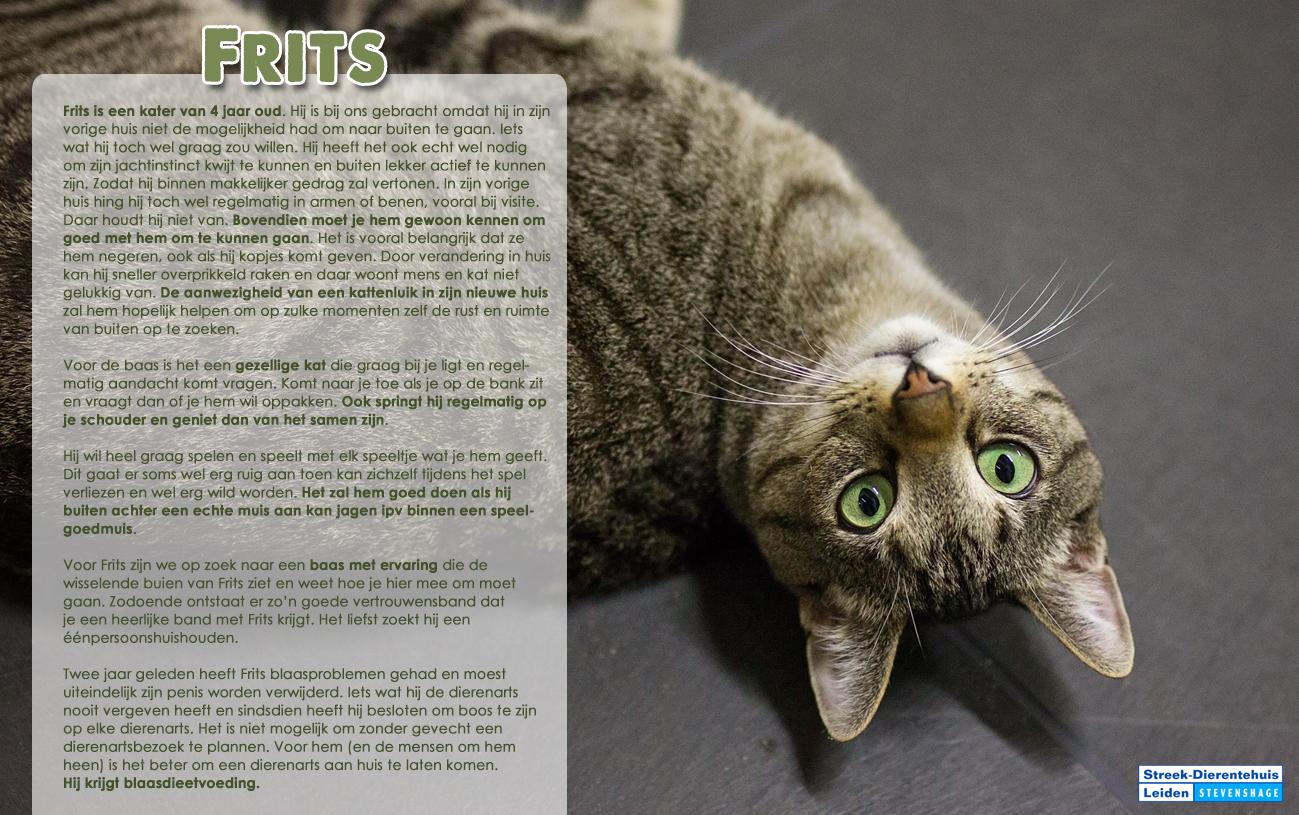 Klik op de foto van een overzicht van plaatsbare katten bij Dierentehuis Stevenshage in Leiden.