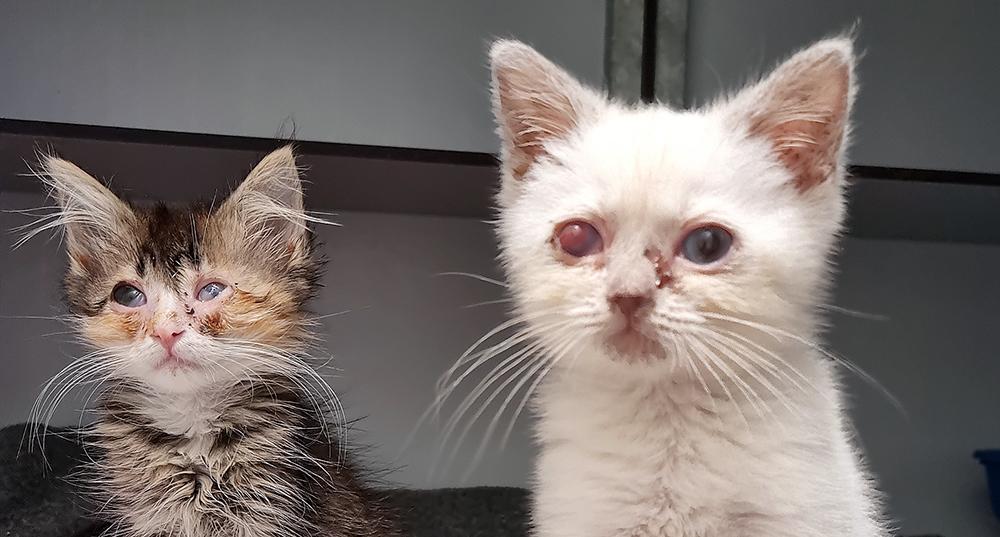 Intussen in het asiel: Echte Leidsche kittens