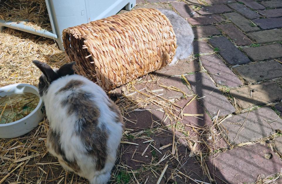 Klik op de foto voor een actueel overzicht van de plaatsbare konijnen bij Dierentehuis Stevenshage in Leiden.