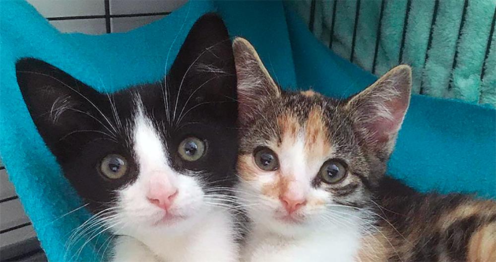 Intussen in het asiel: Kitten update