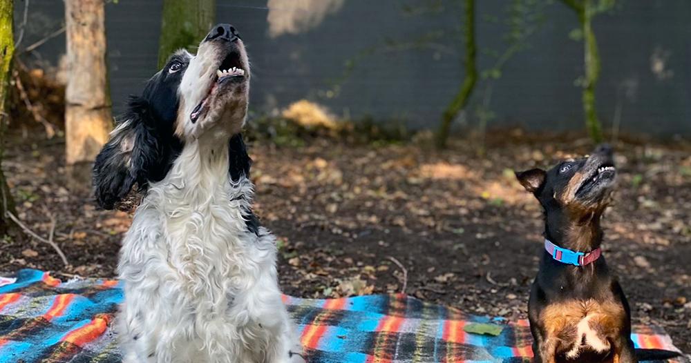 Intussen in het asiel: Los in het hondenbos!